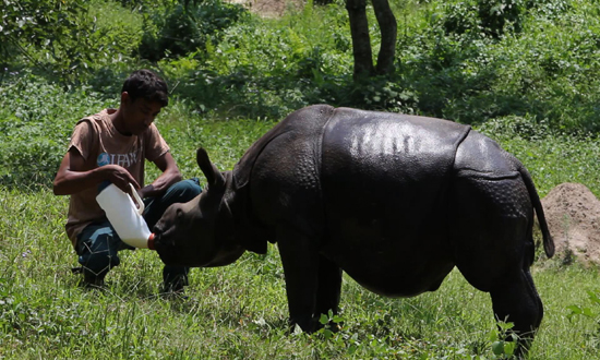 Rare Indian rhinos face growing threat from poachers - CVR